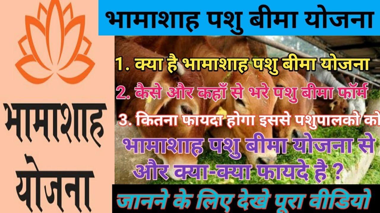 Rajasthan bhamashah pashu bima yojana